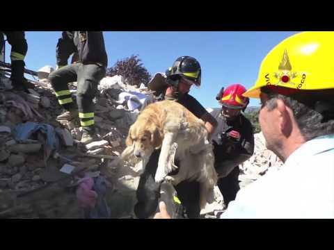 questi vigili del fuoco rischiano la vita per salvare 2 pitbull!
