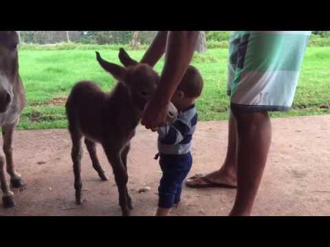 Baby meets mini donkey