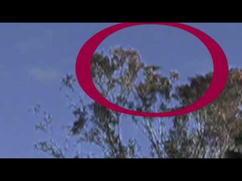 Stunning UFO Sightings Footage caught on tape on the first day of 2010