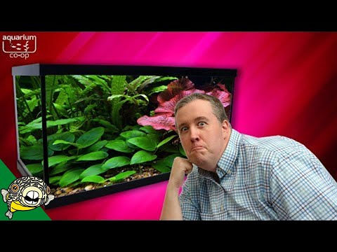 Where to buy Beginner Plants For Aquariums_Akvárium. Heti legjobbak