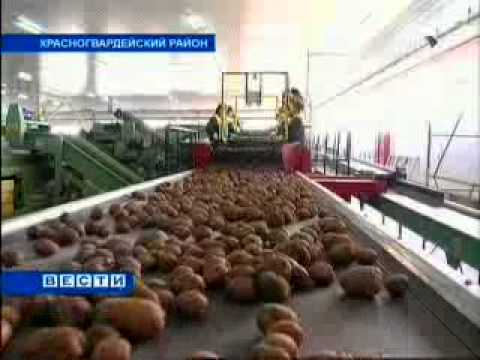 The Opening of the First Stage of  Vegetable Storage in Pregradnoye Village