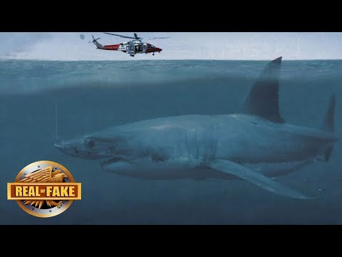 LIVE MEGALODON ON CAMERA BRAZIL - real or fake?