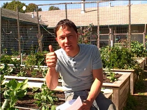 Best Crop to Grow When Guerrilla Gardening & more Organic Garden Q&A