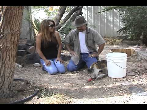 Panning Gold Gold How to Gold Pan to