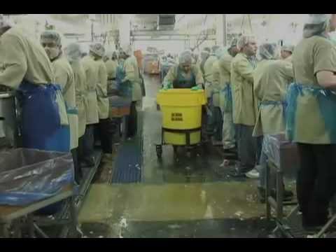 Praca w masarni. W USA do taniej pracy są Meksyki, w Europie Polacy. To jest bardzo smutne