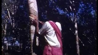 Tanah Merah Malaysia  city images : Malaysia: Tanah Merah Rubber plantation 1952