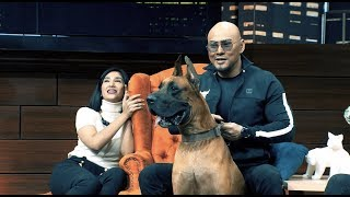 "Video Great Dane, Anjing ""Scooby Doo"" 