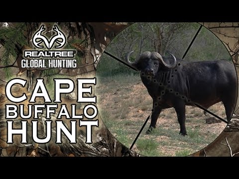 Hunting - Realtree Global Hunting - This week, Ian is stalking Buffalo in Mozambique with his good friends Gavin Ingram and J. P. Kleinhans. They're after an old bull ...