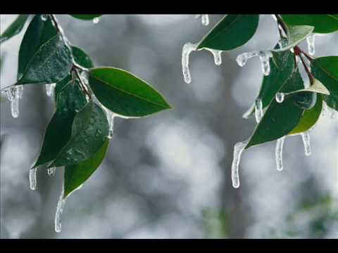 amid - Enya's Amid the falling Snow with relaxing winter scenes lyrics: How I remember sleepless nights When we would read by candlelight, And on the windowpane out...