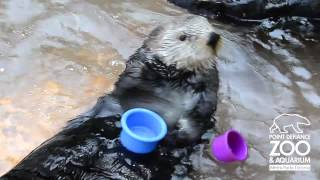 Adorable Sea Otter Stacking Cups