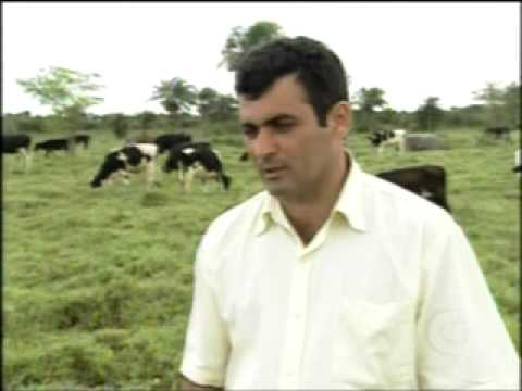 Fazenda Timbaúba  Reportagem Globo Rural (Parte1)