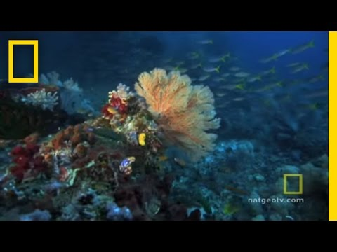 The Great Barrier Reef: National Geographic