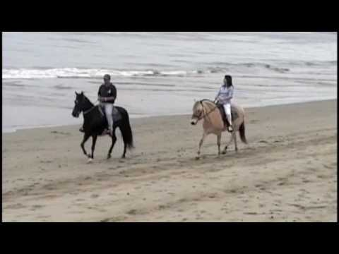 Horseback Beach Riding in Malibu, California