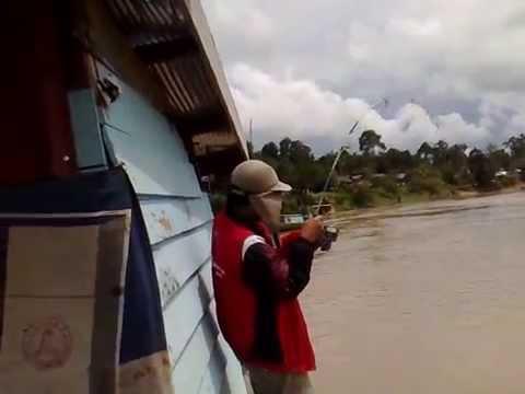 Mancing Mania Patin Sungai 17,5 Kg
