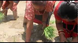 Old Popular Newari Ropain Song  (Nepali Farmer's Song)