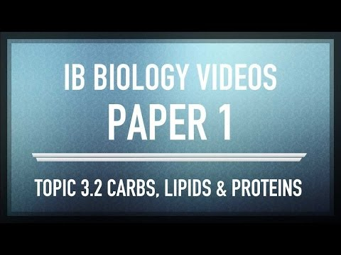 Carbohydrates, lipids and proteins - IB SL Biology Past Exam Paper 1 Questions