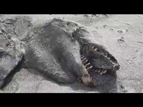 Giant Sea Monster caught on Tape