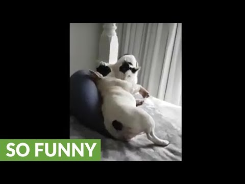 il-gatto-che-pulisce-il-cane