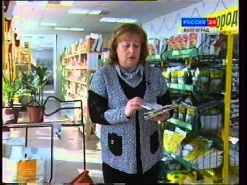 Советы желающим разводить овощи зимой на подоконнике