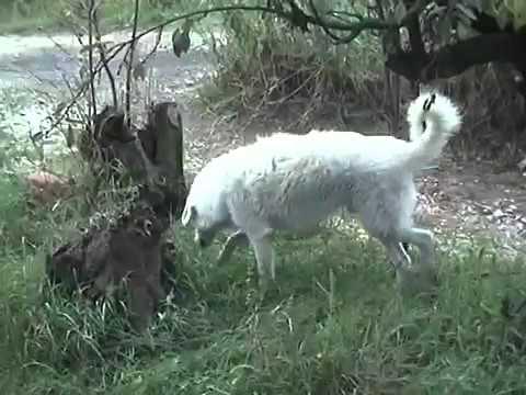 marcellino, il cagnolino salvato da una fine sicura!