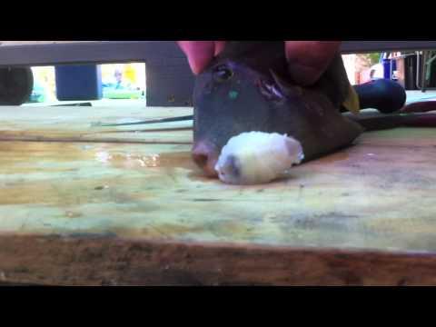 男子切開魚肚做大餐 卻挖出恐怖的奇異生物