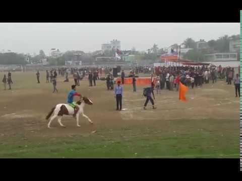 Video নওগাঁ জেলার  ঘোড়া দৌড় প্রতিযোগিতা download in MP3, 3GP, MP4, WEBM, AVI, FLV January 2017