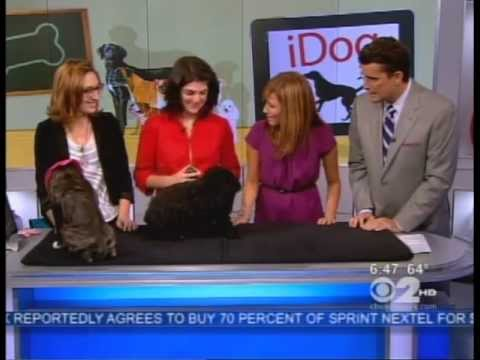 Training Your Dog To Use an iPad, CBS News