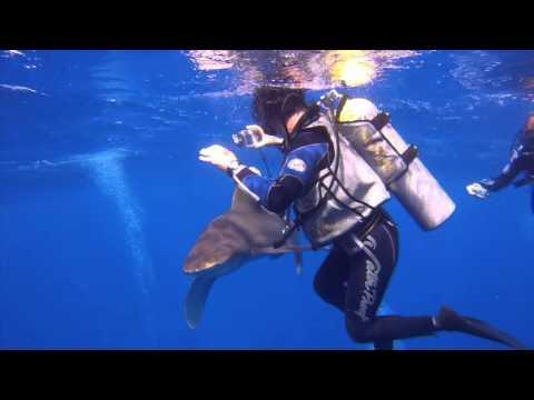 Elphinstone Reef 7/10/2015