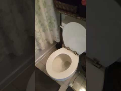 My roommates toilet is sad that they are out of town