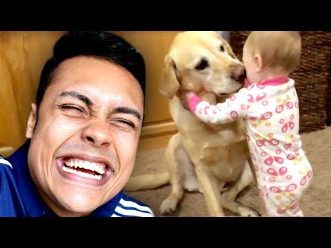 Funny cat videos - REACTING TO CUTE FUNNY DOG VIDEOS (TRY NOT TO SMILE)