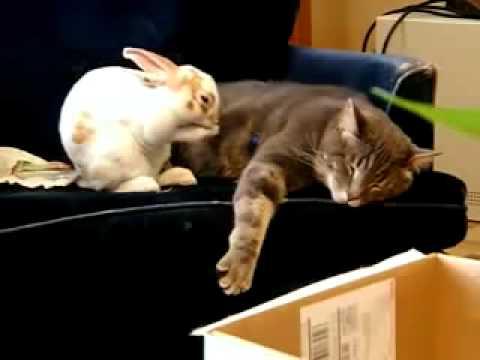 兔子學貓咪睡覺 ,超溫馨畫面