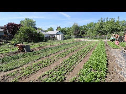 Saying Goodbye To This Farm Plot