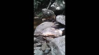 Download Video Skodeng awek mandi bogel!! MP3 3GP MP4