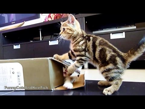 gattini-che-giocano-a-nascondino