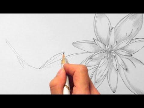 Blume, zeichnen im Zeitraffer 02 (Flower, drawing in fast motion)[HD]