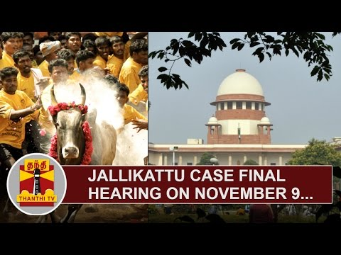 Jallikattu-Case-Final-Hearing-on-November-9--Supreme-Court-Bench-Thanthi-TV