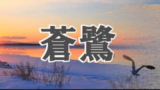 合唱曲蒼鷺あおさぎ/歌詞付き