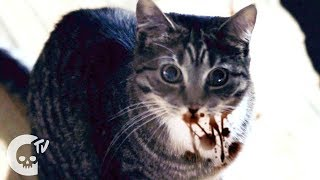 Nonton Meow | Short Film | Crypt TV Film Subtitle Indonesia Streaming Movie Download