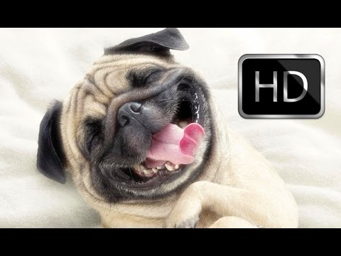 Funny Videos Of Dogs Compilation 2014 – 720p – Funny Videos 2014 – HD