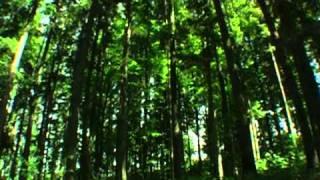 Звуки природы. Живой лес.