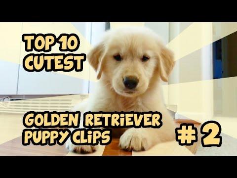 puppy show!