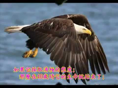 老鷹之歌  中英文字幕