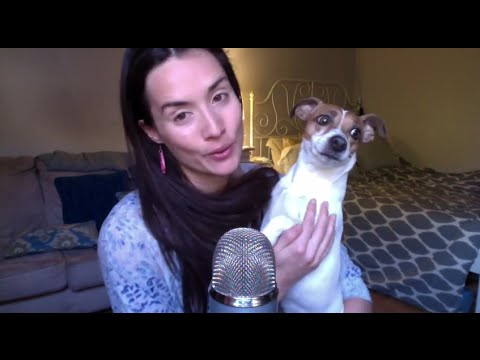 Vegan Dog Food: V-Dog vs Natural Balance