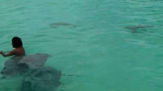 Se baigner ace les raies dans un lagon à MOOREA... - YouTube