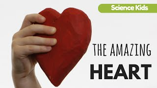 Amazing Facts about the Heart