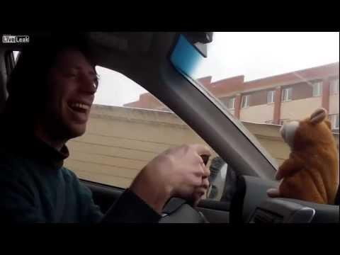 Хомяк трольлюе полицейского (видео)