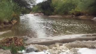 Alamo Wash near Fort Lowell Road was flowing bank to bank on Tuesday, July 11, following heavy rains. Video by Doug Kreutz, Arizona Daily Star.