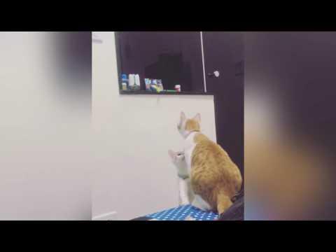 Kissanpentu ei ylety leluun – Äiti tulee auttamaan