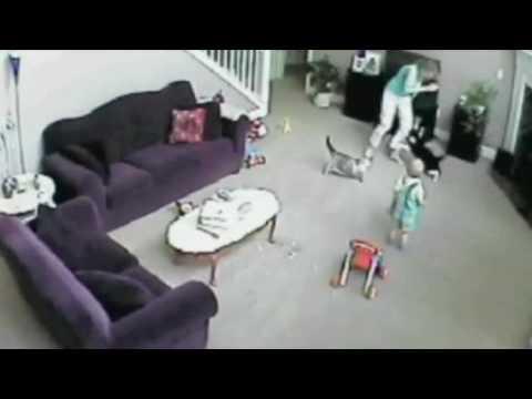 Gato defiende a bebé de niñera