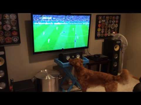 Golden viendo el Mundial de Fúltbol